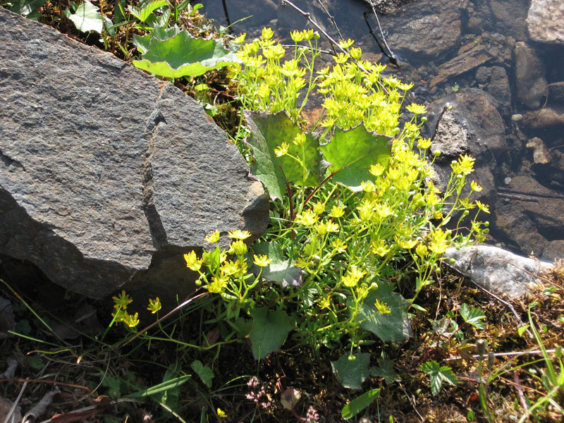 12. Febus en Flora (4)